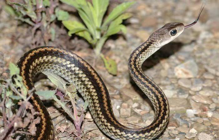 蛇是脊椎动物吗