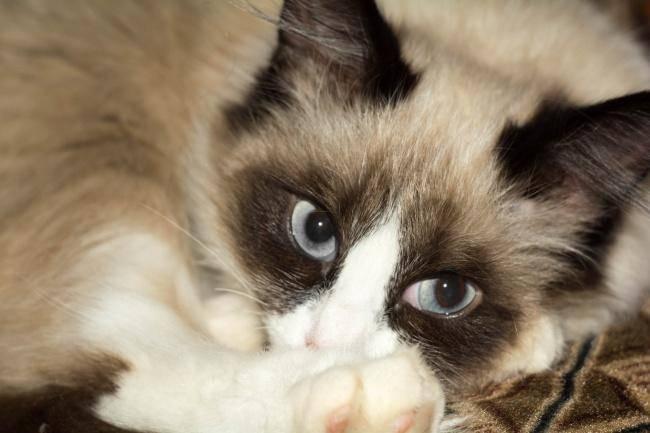 小猫刚出生要怎么养活
