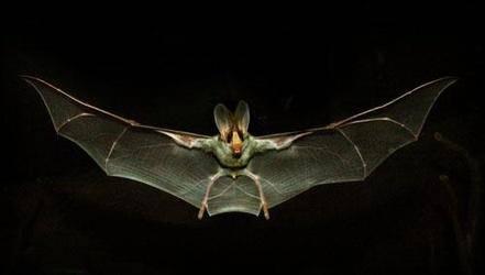 蝙蝠冬眠吗