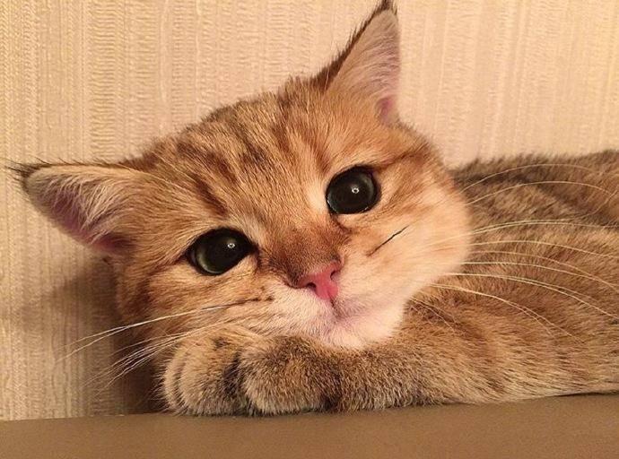 猫咪不吃猫粮怎么办?猫粮的质量要注意
