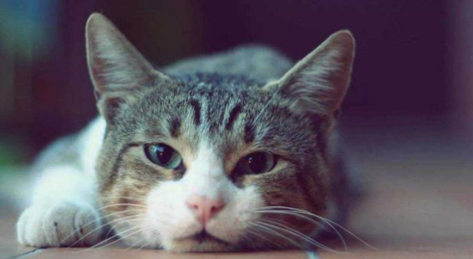 猫携带狂犬病毒吗