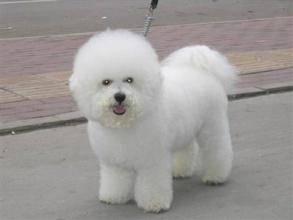 狗狗多大算成犬