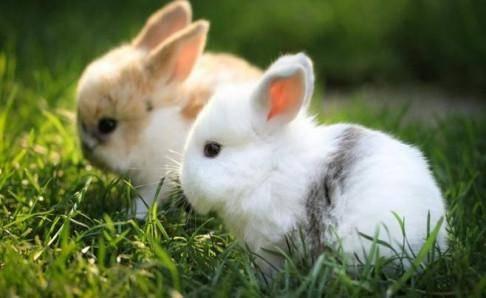 兔子怎么表达讨厌主人