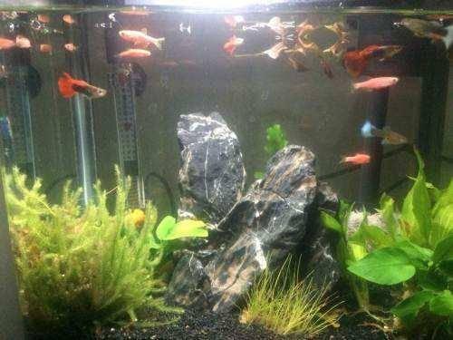 清理鱼缸的鱼种类_鱼缸里的鱼屎怎么清理,如此轻松又快捷-我的宠舍