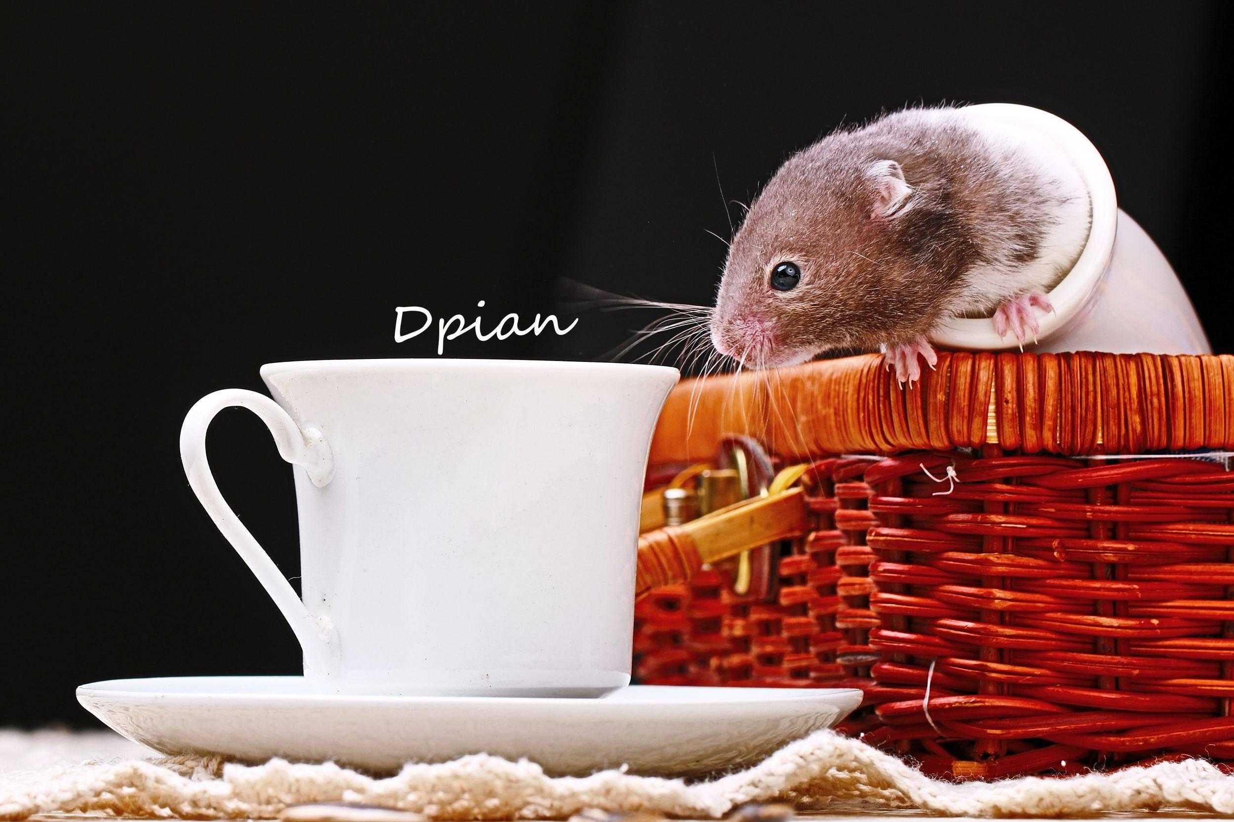 仓鼠可以喝牛奶吗