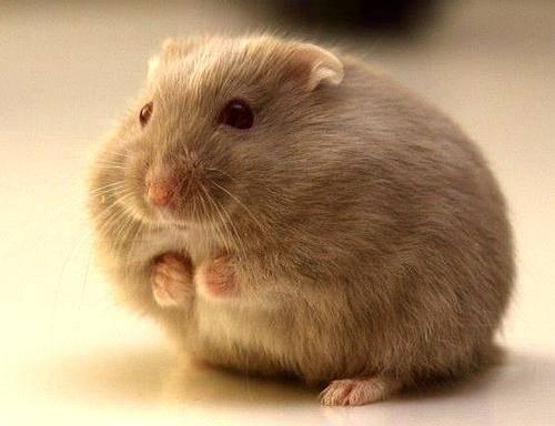 仓鼠死了怎么处理?给它一个有尊严的地方安息-轻博客