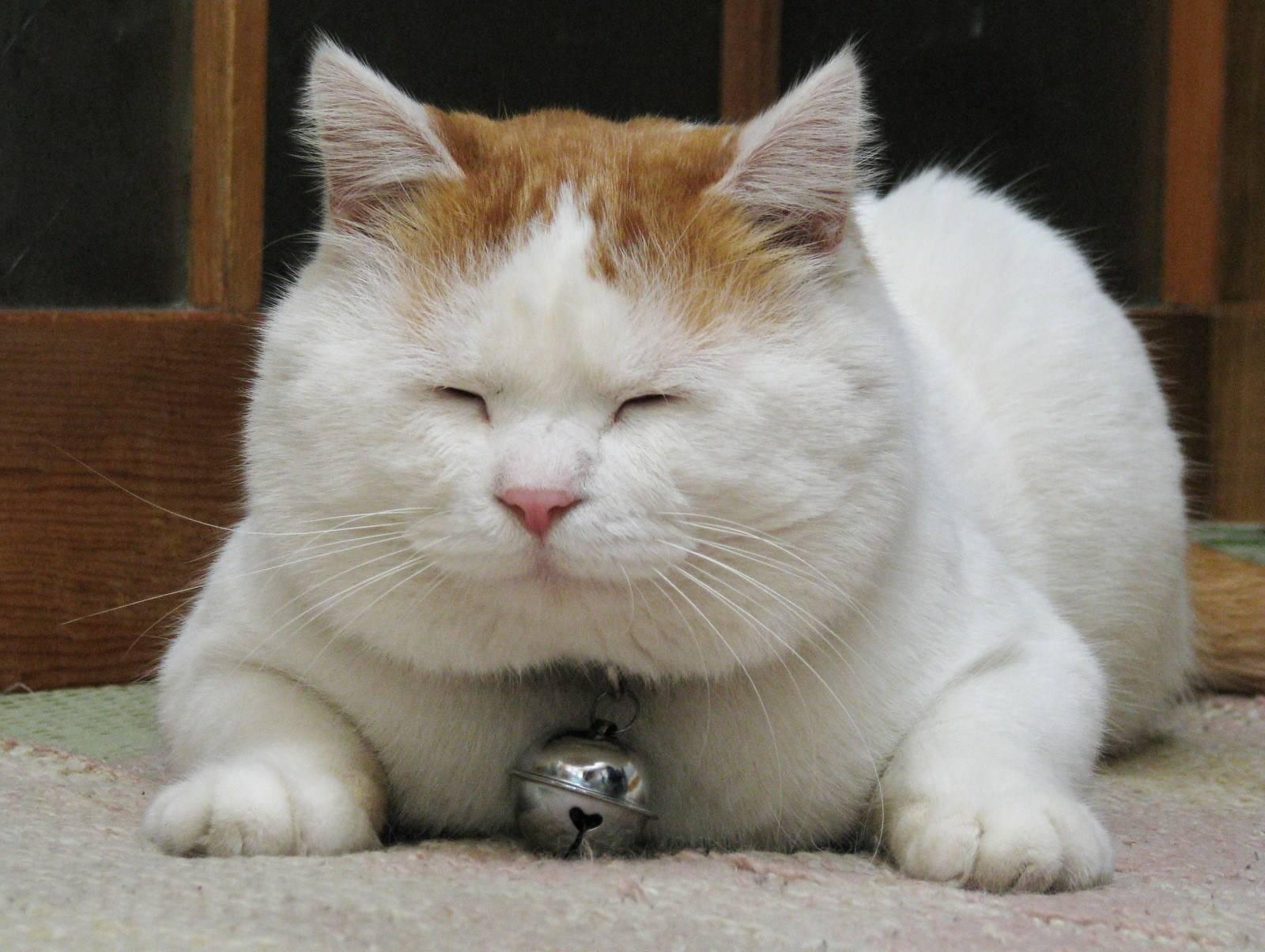 猫咪对主人会有感情吗