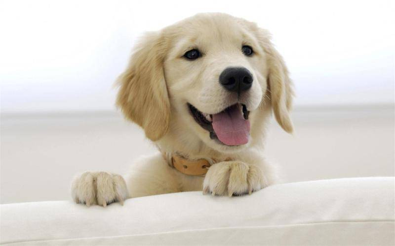 狗狗能喝豆浆吗