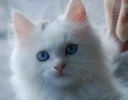 小猫什么时候断奶?饲养奶猫要小心
