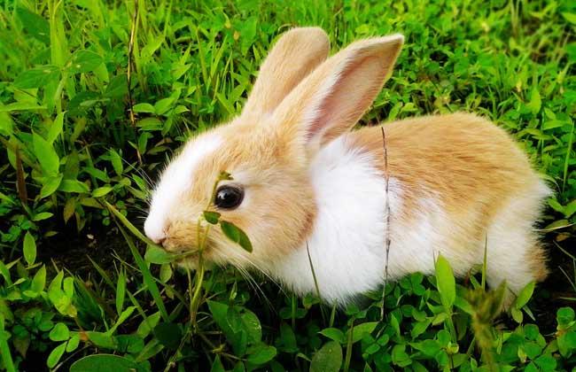 兔子拉稀怎么办