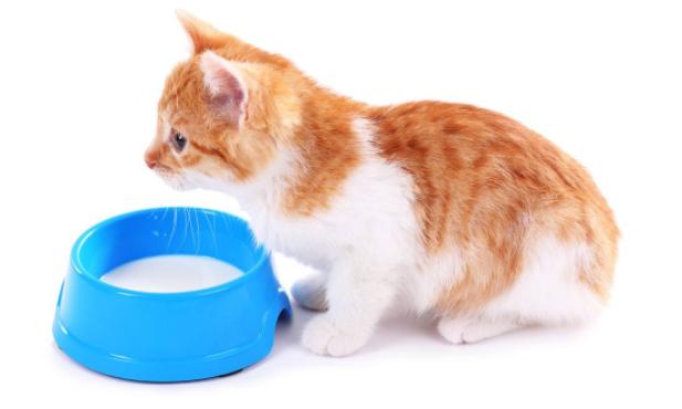小猫咪需要补充营养吗?小猫咪喝牛奶  猫粮制作方法 猫砂制作视频 小猫喝牛奶 猫咪网 小可爱网 第1张