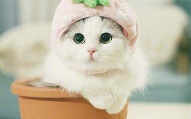 猫咪感冒了怎么办