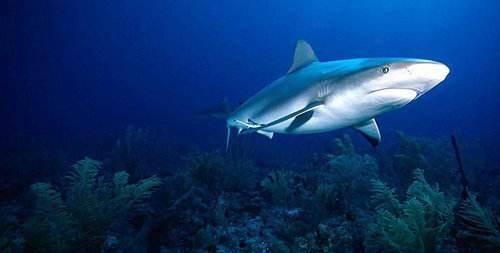鲨鱼是不是哺乳动物