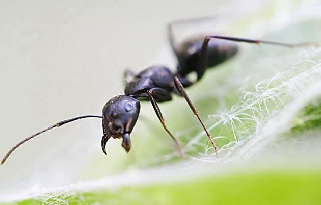 蚂蚁喜欢吃什么