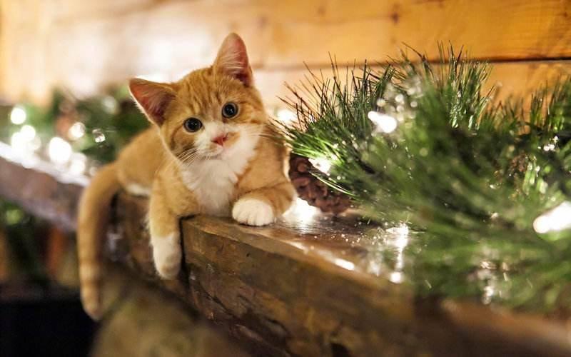 小猫多大断奶