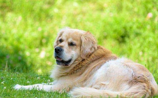 什么狗狗最聪明?智商高的让你惊叹-轻博客