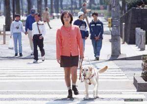 导盲犬品种