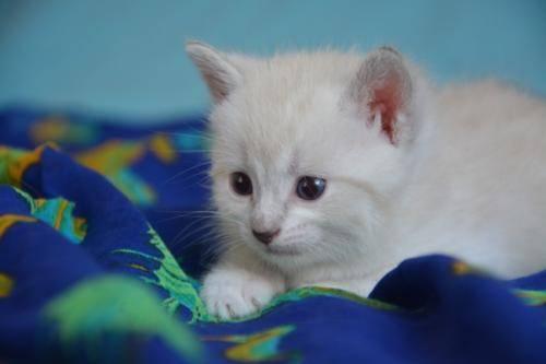 小猫吃什么,各种想不到