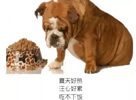 狗狗不吃东西怎么办