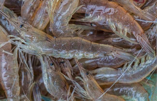 河虾吃什么