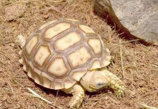 乌龟会冬眠吗